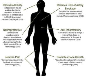 CBD Benefits - Chart using Human Body