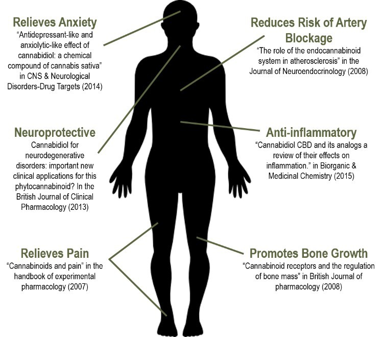 CBD Benefits - chart using human body silhouette