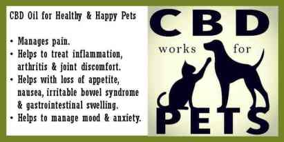 What is CBD Hemp Oil? || What is cannabidiol oil for? -- The benefits of CBD for pets