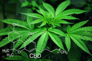Hemp leaves and CBD molecular structure