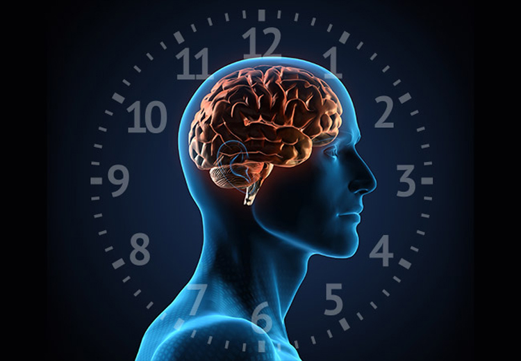 Brain and symbolic biological clock.
